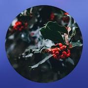 La webradio Un air de Noël